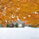 Vermont-Maple