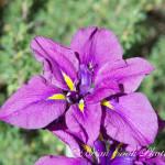 PurpleWow1